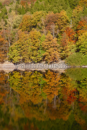 germany autumn forest water reflection