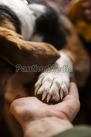 womans hand holding paw of dog