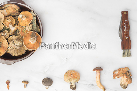 different edible mushrooms top view on