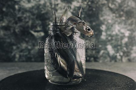 frische sardellen in glas mit wasser