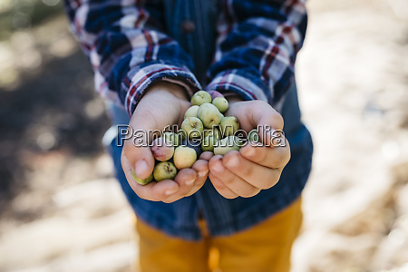 hands of boy holding freshly picked