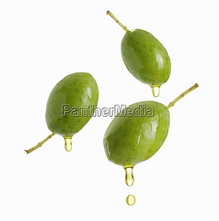 olivenoel tropft aus gruenen oliven