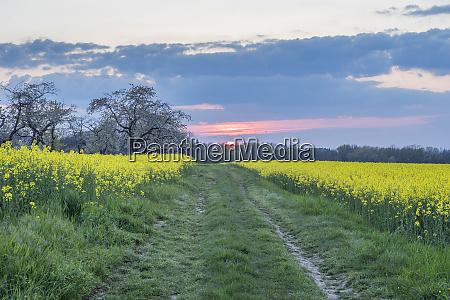 germany saxony anhalt wernigerode field path