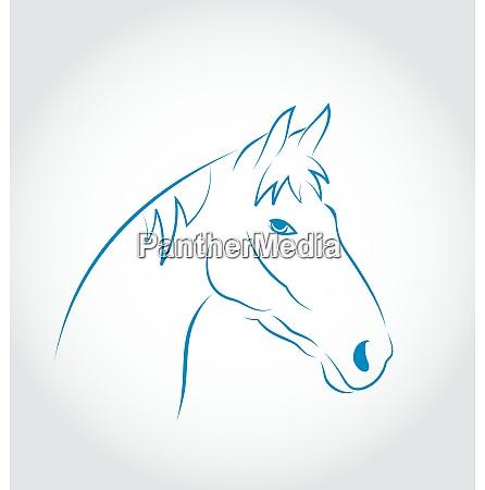 illustration hand drawn head horse isolated