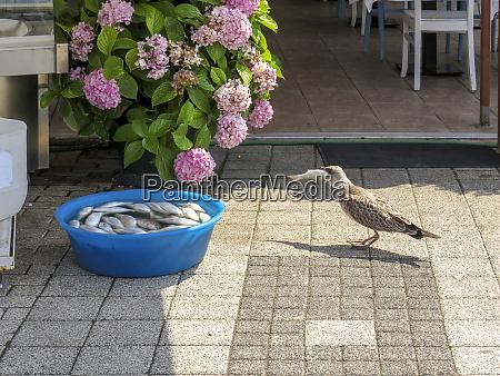 vogel stiehlt einen fisch