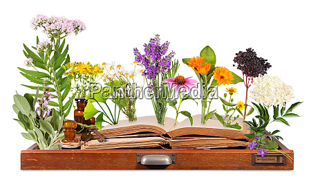 medical plants with old books and