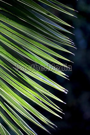 nahaufnahme foto von gruenen palmenblatt sonnenlicht