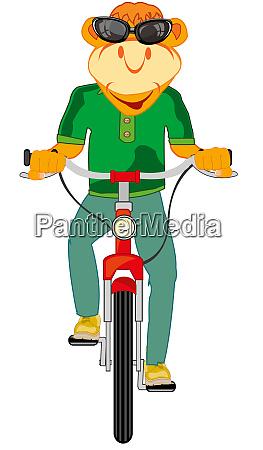 cartoon tier auf transporteinrichtung fahrrad vektor