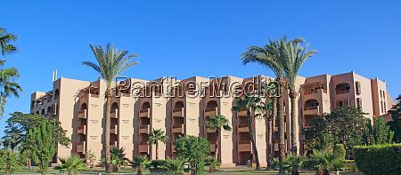 palmen und tropische vegetation wachsen im