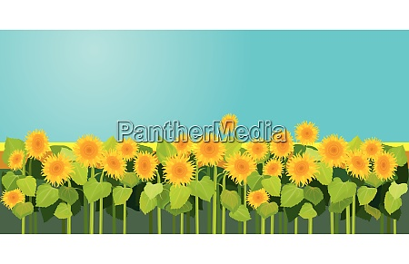 summer season nature picture field of
