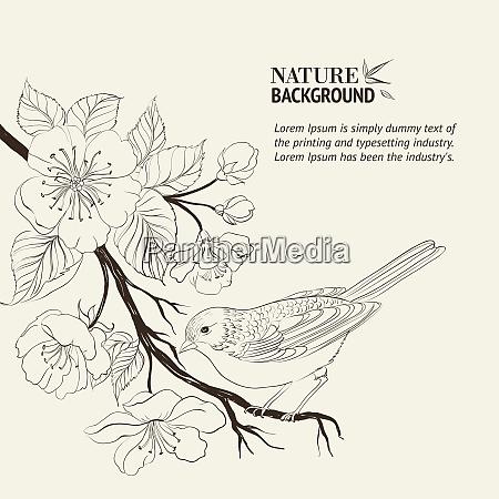 hand gezeichnet vogel auf sacura zweig