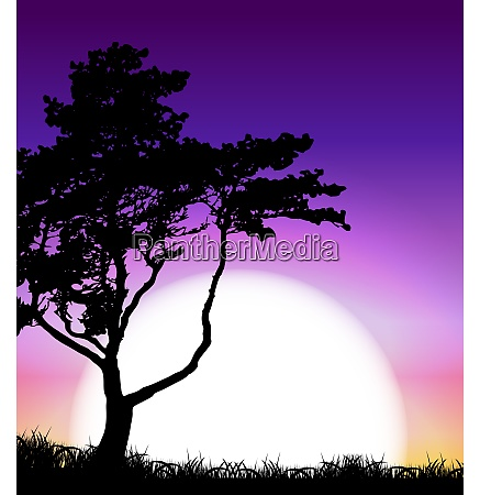 silhouette of tree on sunset background