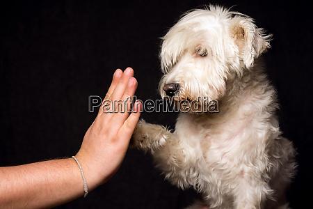 freundschaft mit hund