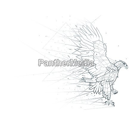 abstract eagle low poly wireframe