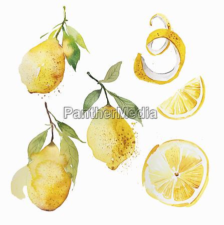 watercolour painting of lemons