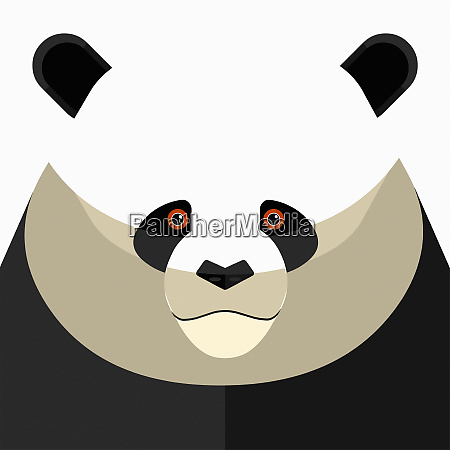 nahaufnahme des pandas gesicht blick auf