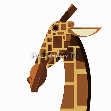 close up of giraffe mit blick