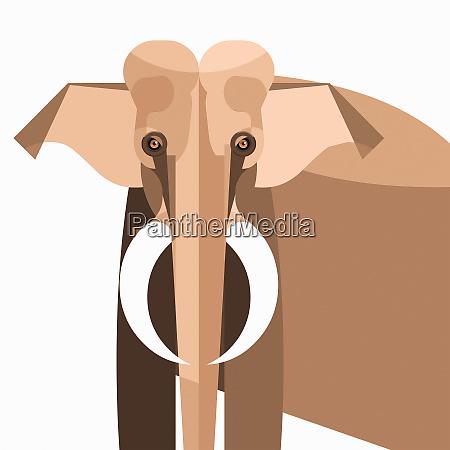 nahaufnahme des elefanten mit blick auf