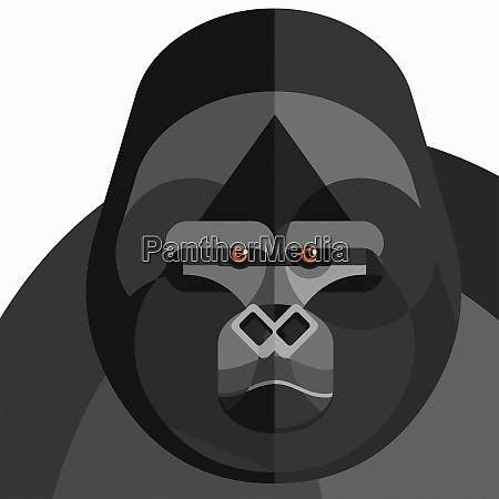 nahaufnahme des gorillas gesicht blickend auf