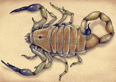 illustration des todesstalkers skorpion
