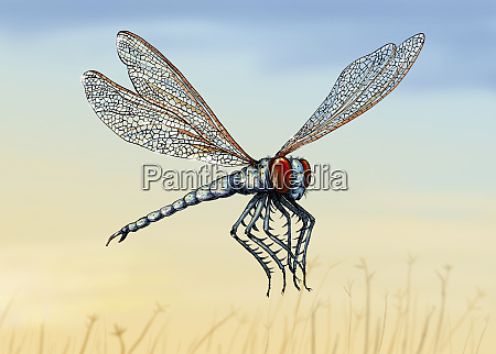 illustration des ausgestorbenen meganeura insekts
