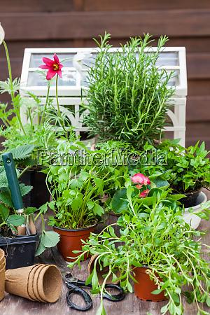 variation von pflanzen und blumentoepfen mit