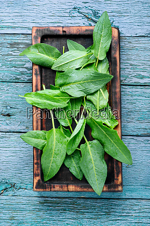 bundle of fresh spinach