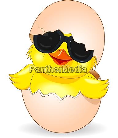 cute chicken in black sunglasses