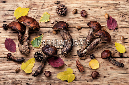 waldrohe pilze