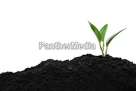 seedling and plant growing in soil