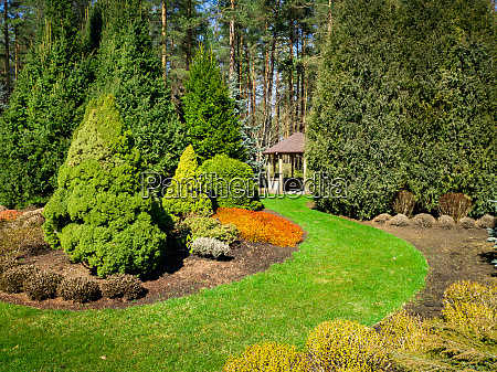 beautiful landscaped garden with conifers and