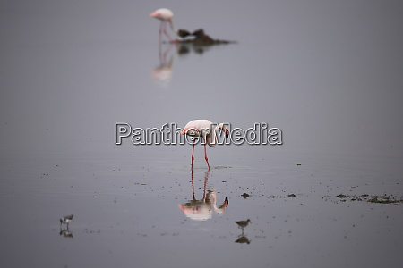 two, flamingos, and, some, other, birds - 26854124