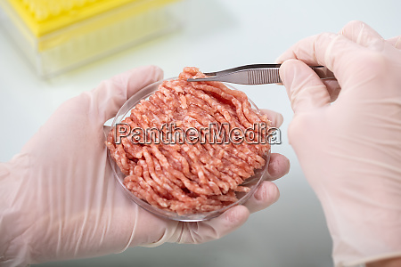 expert inspecting meat in laboratory