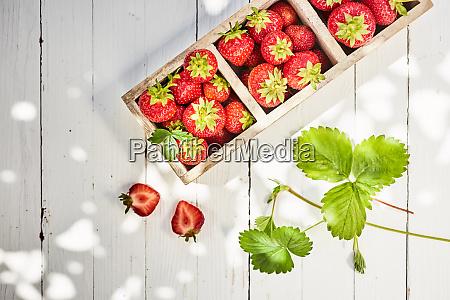 frische rote erdbeeren in einer geteilten