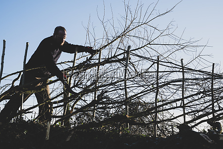 bearded man building a traditional hedge