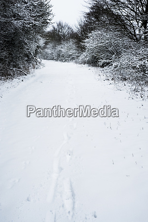 high angle view of animal tracks