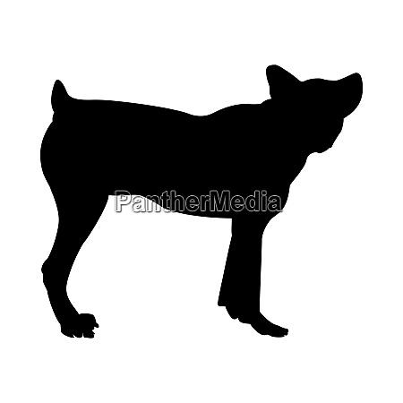schaf hund silhouette