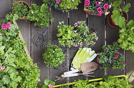 pflanzen von kraeutern und blumen fuer