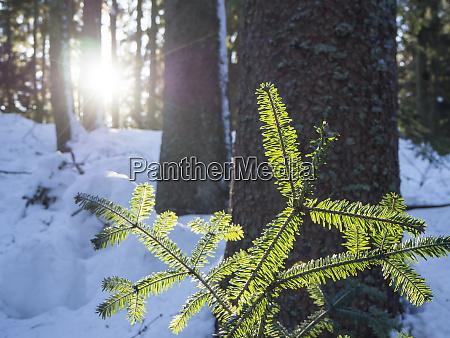 germany upper bavarian forest nature park
