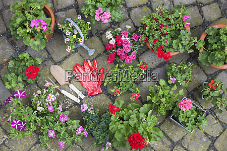 various potted spring and summer flowers