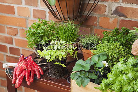 various potted spice plants on terrace