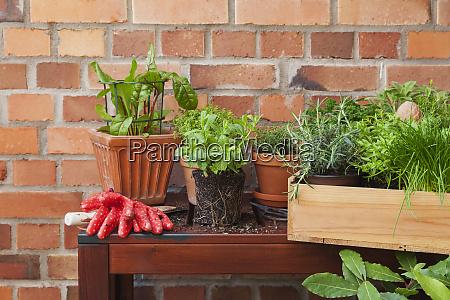 verschiedene topfgewuerzpflanzen auf der terrasse