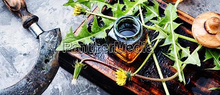 dandelion plant on table