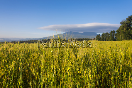 rwanda virunga national park ears of