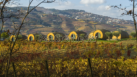 large, wine, barrel, structures, for, accommodation - 26932128