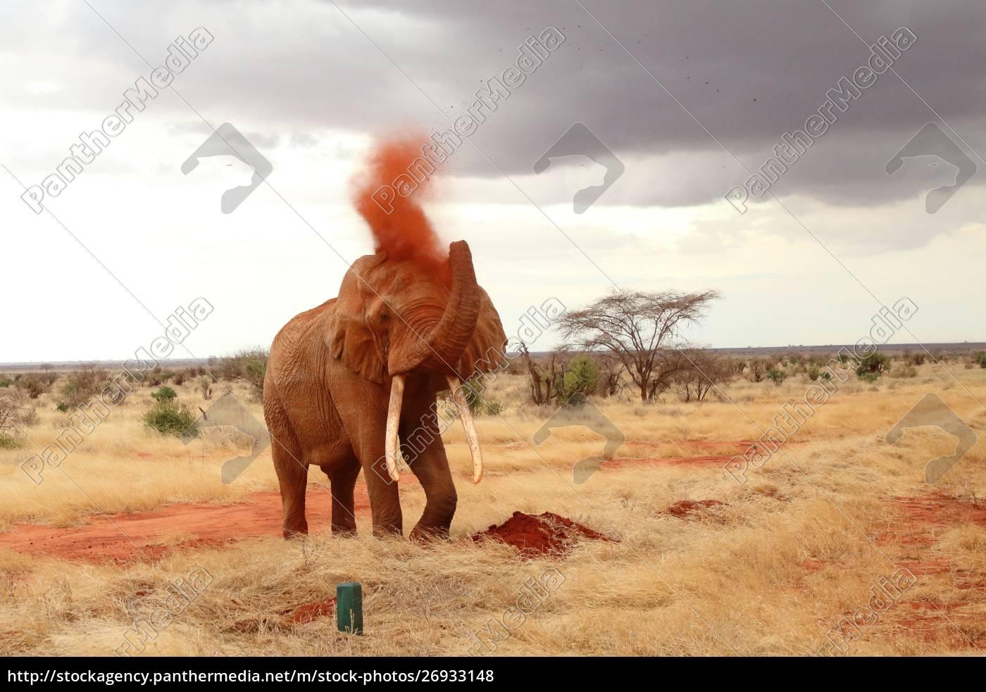 der, mächtige, elefant, nimmt, eine, sanddusche - 26933148
