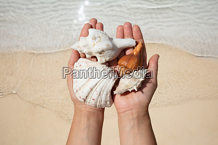 womans hand holding seashells over the