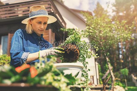 female gardener planting flowers in flowerpot