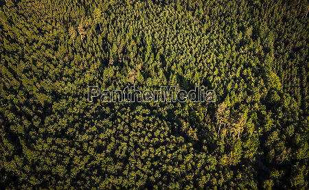 aerial top view of coniferous green