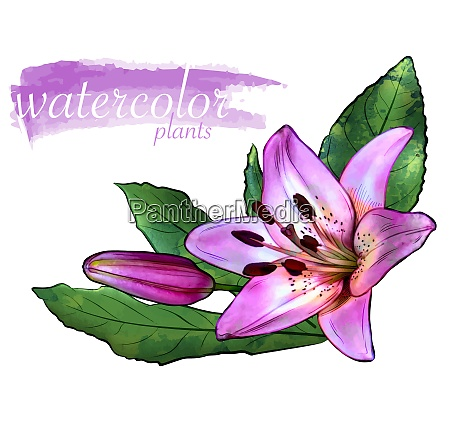 purple watercolor flower with leafs